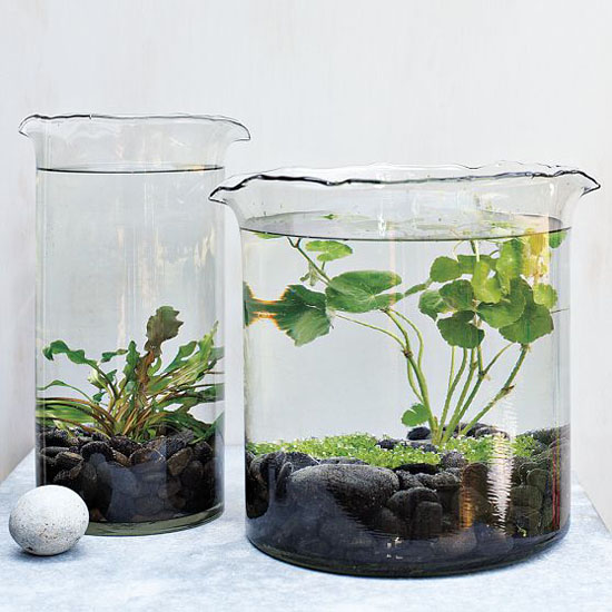 Thedesignerpad thedesignerpad a little nature indoors for Indoor gardening glasses