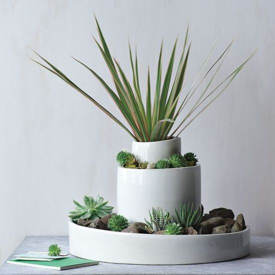 Thedesignerpad thedesignerpad a little nature indoors - Indoor water plants list ...