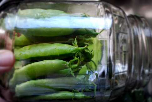 Quick & Easy Pickled Sugar Snap Peas - The Art of ...