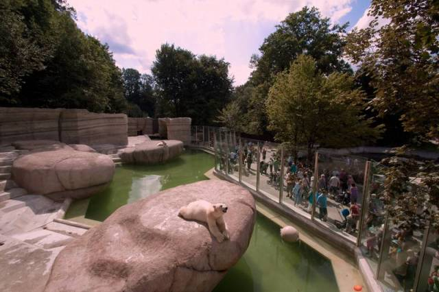 Munich Zoo's very cool rhino. - Picture of Tierpark Hellabrunn ...