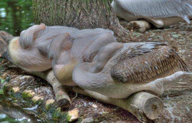 Hellabrunn Zoo // MUNICHfound.com