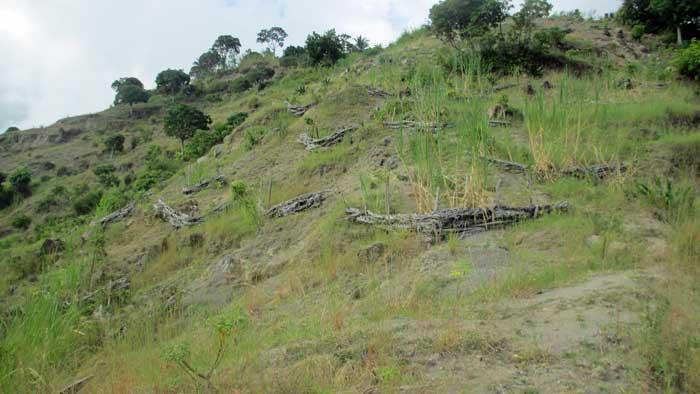 Un flanc de colline dans la 11esection communale de Petit-Goâve où les seuils sont plus ou moins toujours fonctionnels, avec de petites plantes qui poussent dans le sol - Photo : AKJ/Milo Milfort