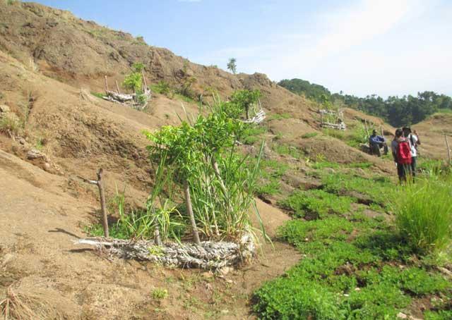 Quelques seuils construits de pailles sèches sur une colline complètement dénudée en août 2013 à Doucet. Des plants d'arachide rampent vers les seuils au niveau de la partie inférieure de la photo - Photo: AKJ/Milo Milfort