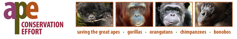 Ape Conservation Effort