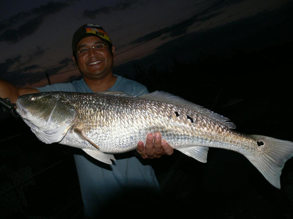 Red drum at nanliao saltwater ponds adventures of an for Small fishing sponsors