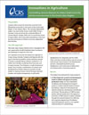 Fact sheet on the Great Lakes Cassava Initiative
