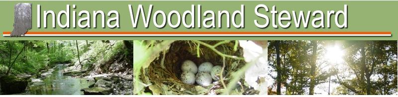 Indiana Woodland Steward - WSI Presidents Letter 2019