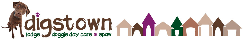 Digstown - Denver Doggie Day Care, Lodging & Spaw