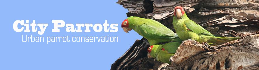 City Parrots