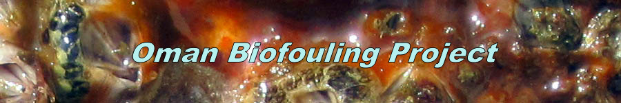 Biofouling Project Oman