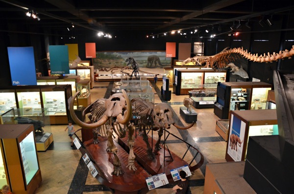 Ann Arbor Museums Natural History