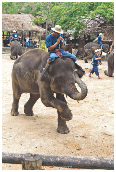 Chiang Mai Elephants ride to the village of Long Neck Girls and Other Tribes of Thailand