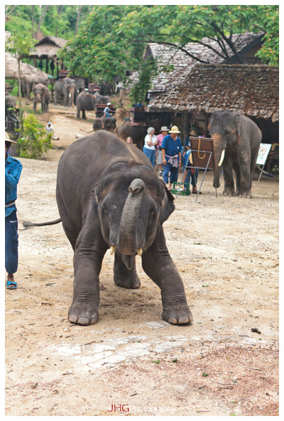 Chiang Mai Elephants ride to the village of Long Neck Girls and Other Tribes of Thailand JHGphoto