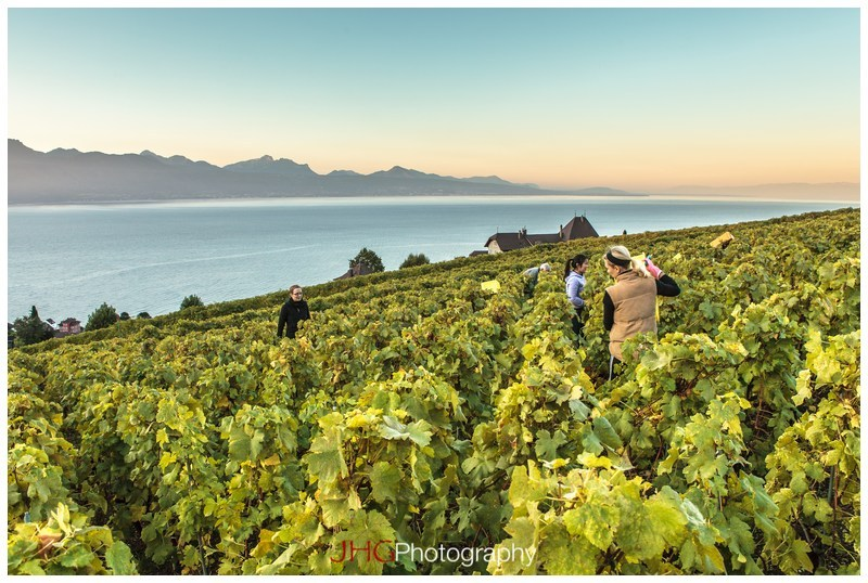 Vendanges Lavaux Suisse Switzerland Grape Harvest JHGphoto Lac Léman Landscape JHG Canon 5D MKII