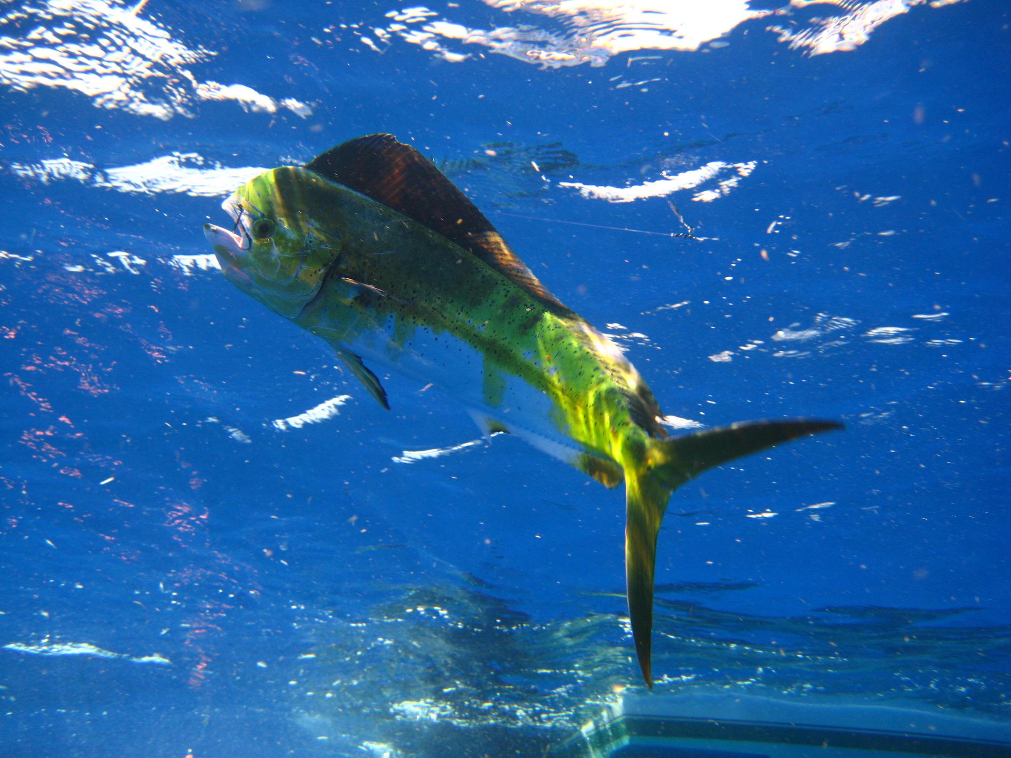 Islamorada & Key Largo Charter Fishing Types - Islamorada ...