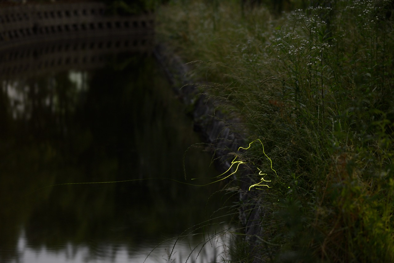 fotografo delle lucciole