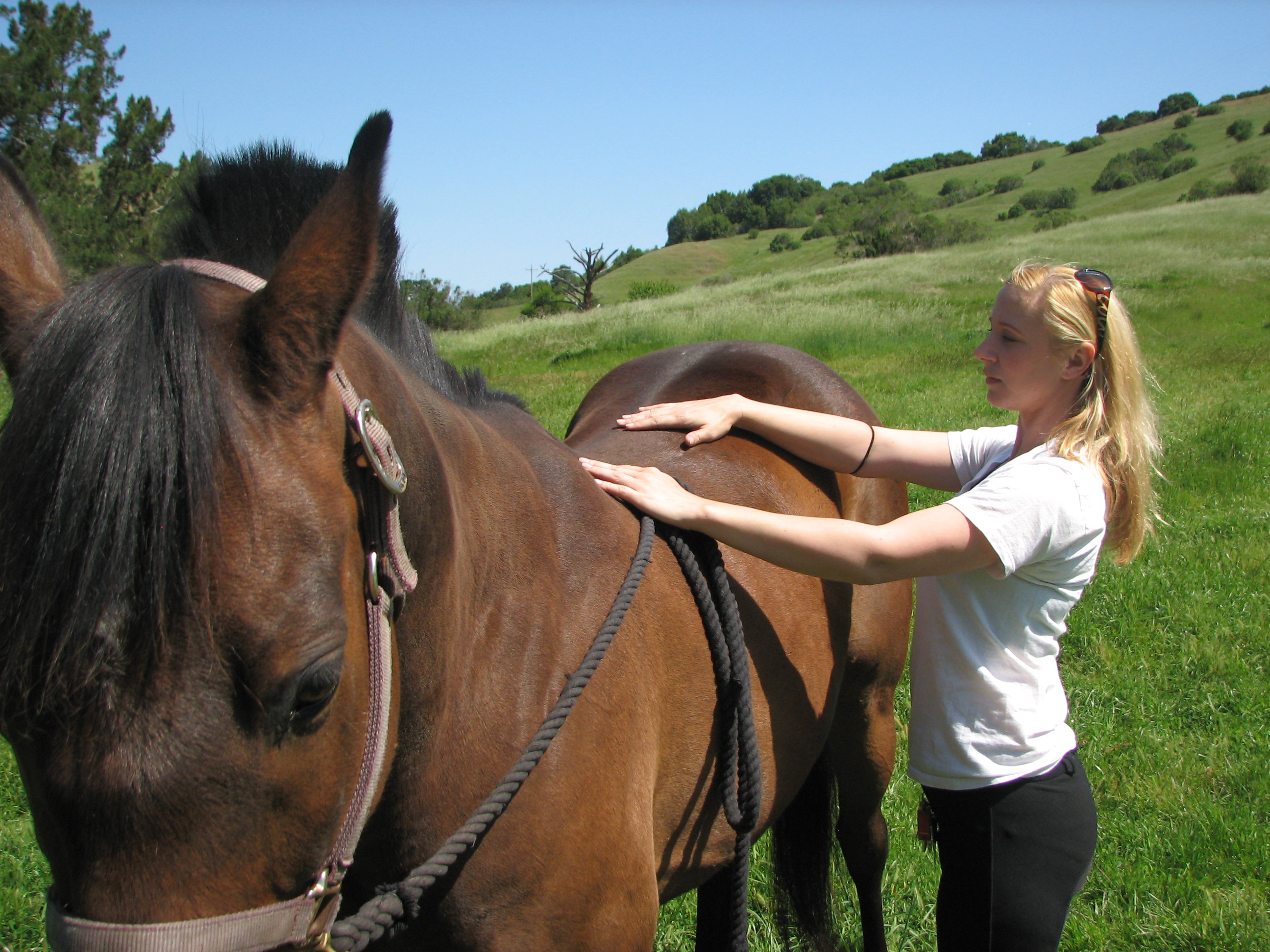 Image result for Horse's Back Healthy
