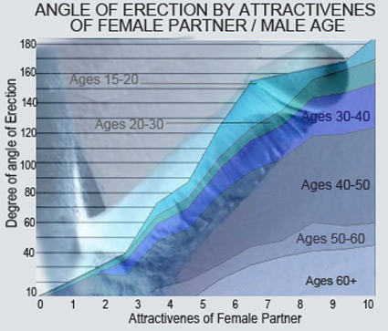 Average erection angle