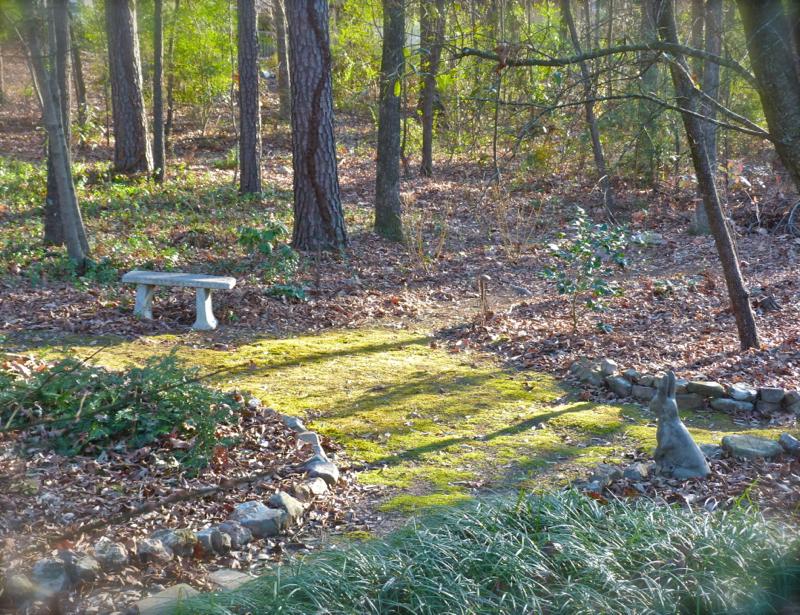 Growing A Moss Path Deb S Garden Deb S Garden Blog
