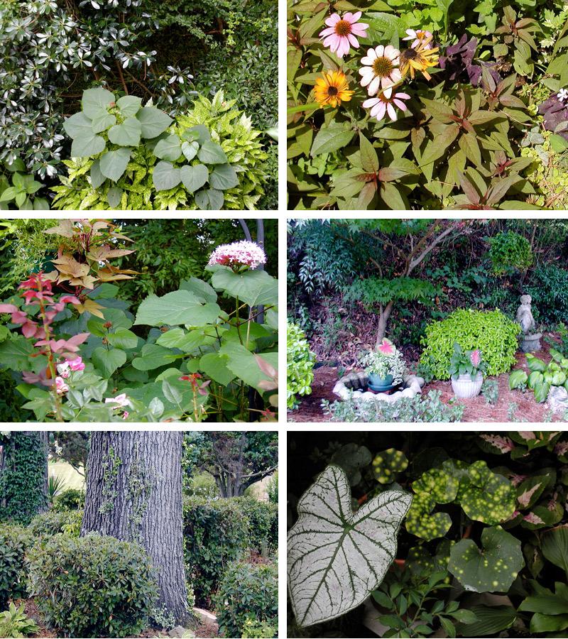 Carol S Garden: A Southern Garden Party