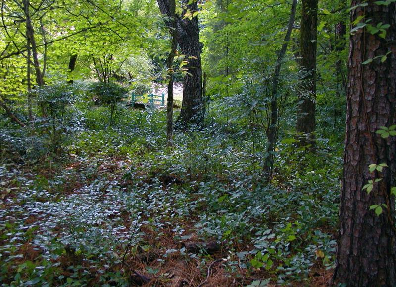 A New Woodland Path - Deb's Garden - Deb's Garden Blog