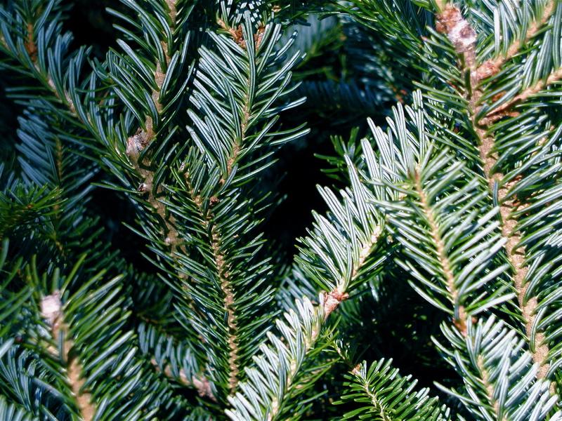 A Three Tree Christmas
