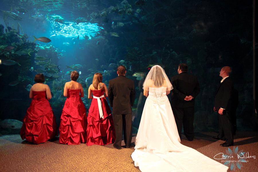 Florida Beach Wedding With Aquarium Reception: Carrie Wildes Photography