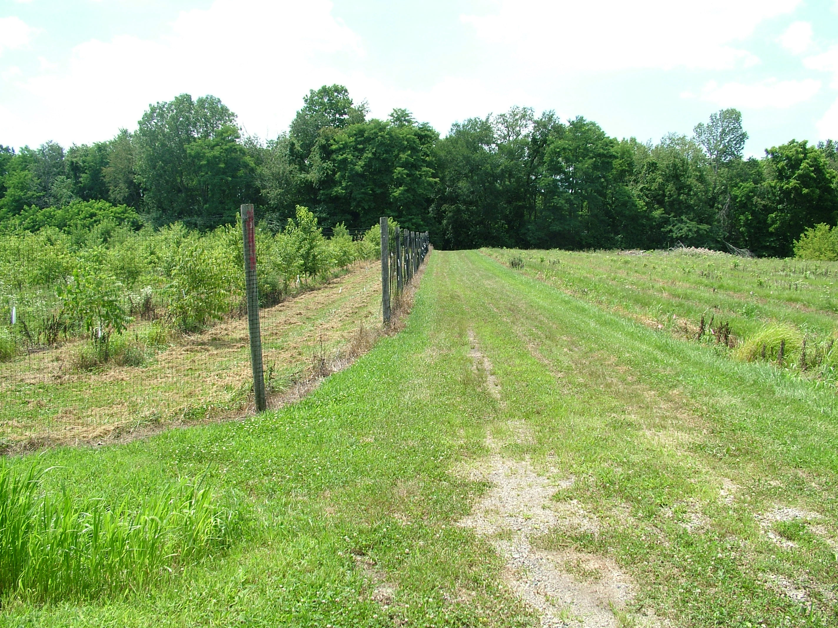 Tree Plantings In Their Third Growing Season Showing Growth Inside Left And Outside Right A Plastic Mesh Deer Exclusion Fence